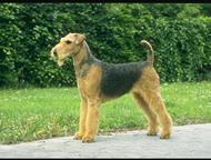 Стрижка собак Стрижка собак с выездом на дом. Стандартные и гигиенические стрижки, тримминг, стрижка когтей, мойка сушка, удаление колтунов. С любовью, Кемерово - Вязка собак