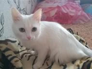 Новомичуринск: Отдам в хорошие руки Отдам кошку в хорошие руки, по причине аллергии у детей. Кошка домашняя не гуляет на улице. К лотку приучена. Ей второй год. Игру