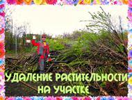 Воронеж: Спиливание деревьев и корчевание пней Спиливание деревьев и корчевание пней. Расчистка и планировка участка. Снос и демонтаж домов. Земляные работы и